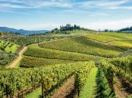 Known for its namesake wine, Chianti is just one of many Italian regions that exports specialty goods to the U.S.