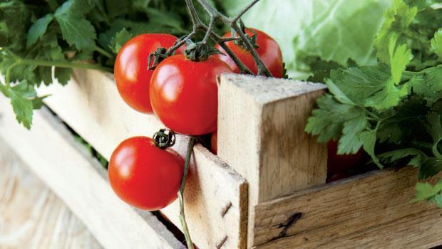 Fresh Take on Foodservice Distribution